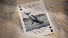 Bicycle Sharks Playing Cards by US Playing Card-with Magnetic Card option (2 cards)