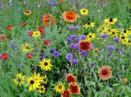 Northern Zone Mixed Assortment Annuals and Perennial Flowers