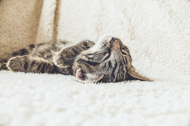 Your Cat's Sleeping Position Can Tell You What They're Thinking