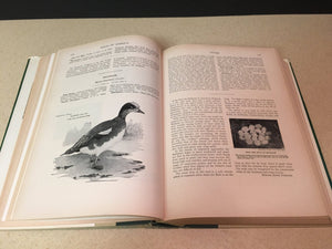 Birds of America Prepared under the University Society 1936 A Vintage Book