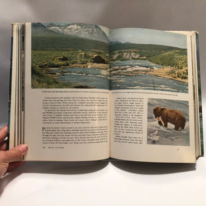 Wild Animals of North America by the National Geographic Society  1960 Amazing Photographs Good Descriptions on Habitat Diet and Behavioral