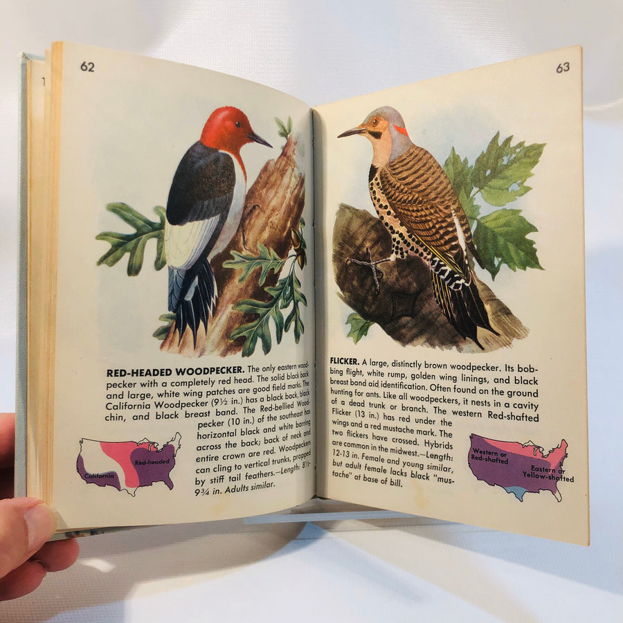 Birds A Guide to the  Most Familiar American Birds 1949