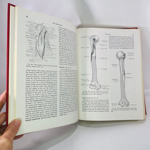 Essentials of Human Anatomy by Russell Woodburne 1957-Reading Vintage