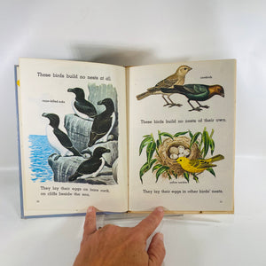 Bird Nests by Nina Shackelford 1969 A Golden Beginning Reader