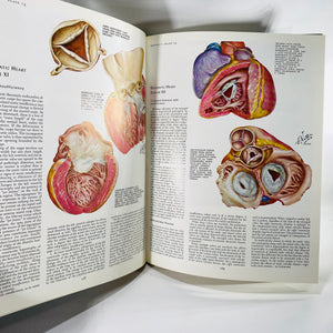 The CIBA Collection of Medical Illustrations The Heart Volume 5  by Frank Netter, MD 1969