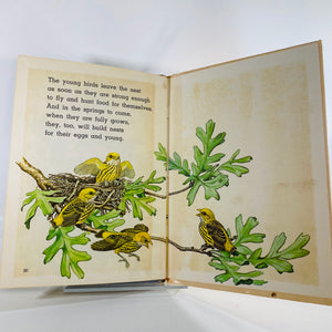 Bird Nests by Nina Shackelford 1969 Golden Beginning Book-Reading Vintage