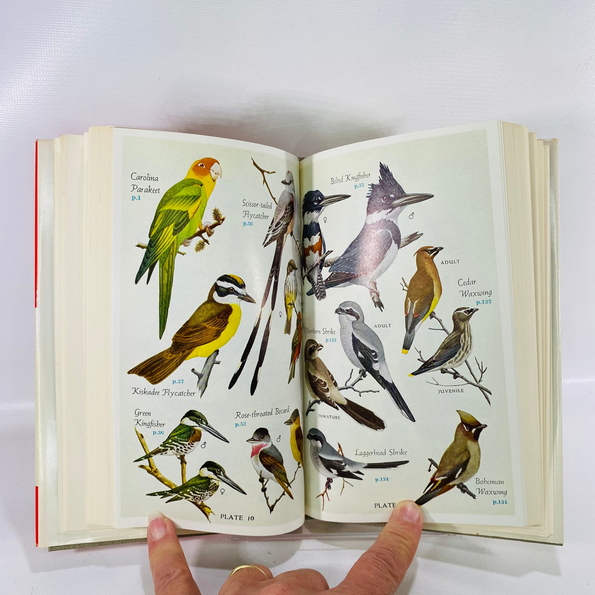 Audubon Land Bird Guide Birds by Richard Pough 1949-Reading Vintage