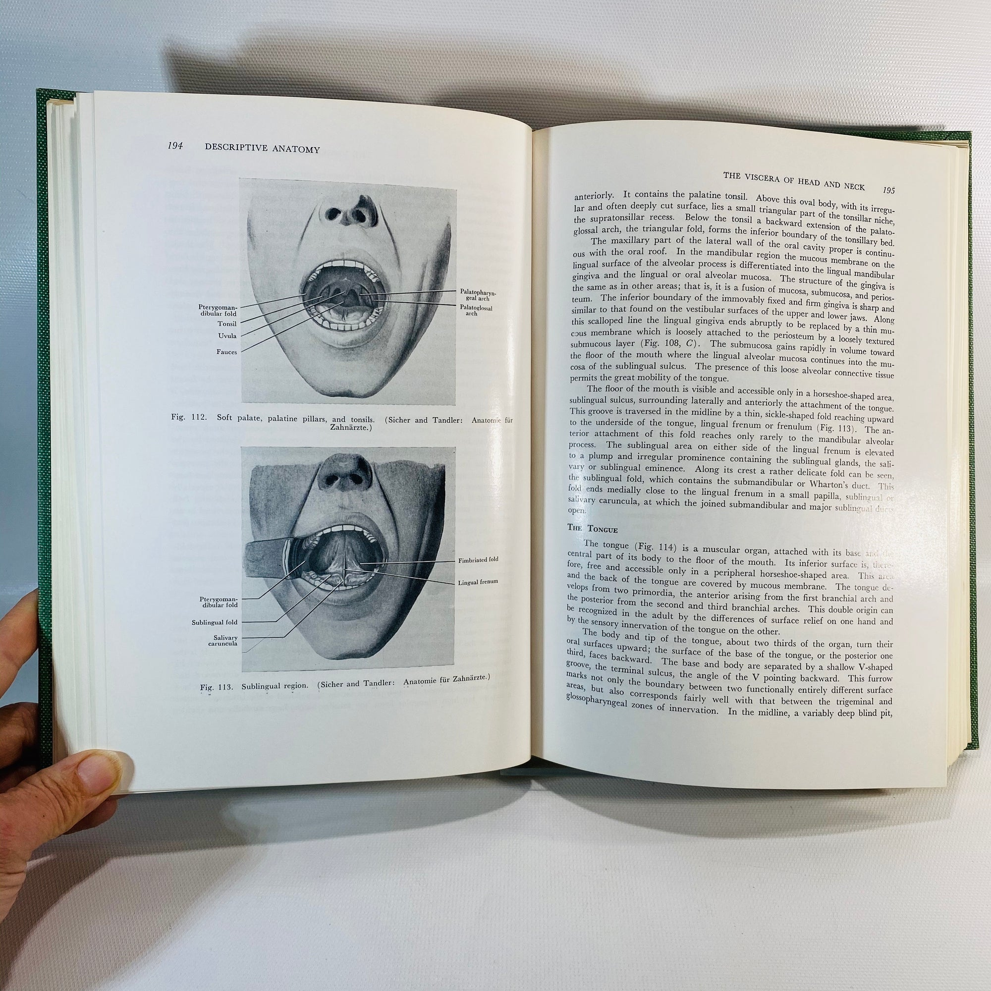 Oral Anatomy by Harry Sicher 1960 Dental Book-Reading Vintage
