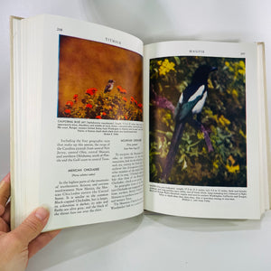 American Birds in Color Land Bird by Hal Harrison 1951-Reading Vintage