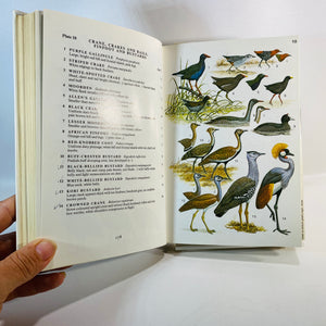 Guide to the Birds of East Africa byJ.G. Williams 1981-Reading Vintage