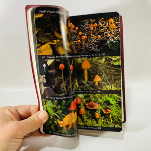 The Audubon Society Field Guide to North American Mushrooms by 1981 First Printing