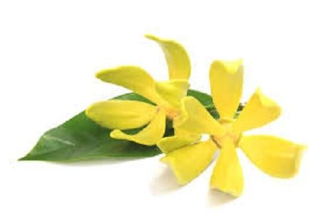 Angel's Mist Ylang Ylang Essential Oil