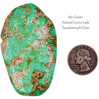 "Natural CARICO LAKE Turquoise Pseudomorph Clam ""MONSTER"" 287ct Cabochon LOT Cab"