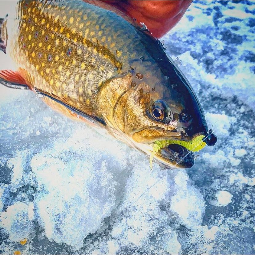 Icing Winter Trout