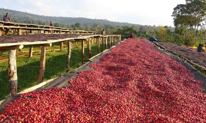 The World's Top Coffee Producers