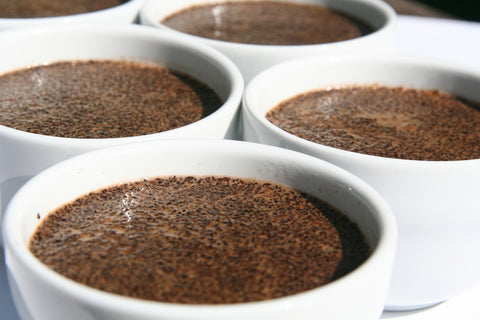 coffee cups filled with coffee grounds and water for cupping purposes