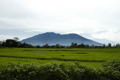 Sumatra landscape with volcano in distance