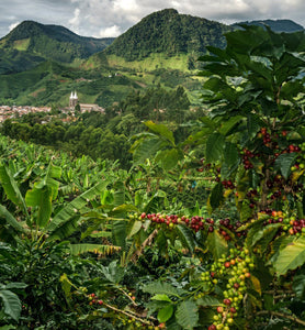 colombia coffee plantation in highlands