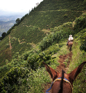 colombia-coffee-plantation-trail
