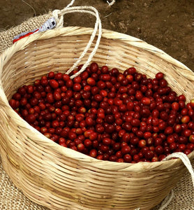 colombian ripe coffee cherries in wicker basket