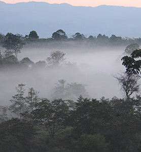 Costa Rica coffee plantation in the mist