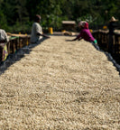 Ethiopia workers sort coffee beans during drying stage