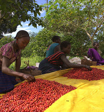 ethiopian workers sort coffee cherries on mats