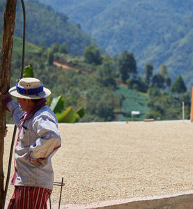 worker stands next to coffee drying on an outdoor patio