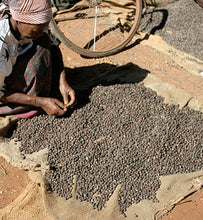 Kenyan workers sorts dried cherries