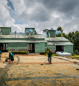 Uganda workers turn beans on drying patio