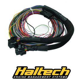 Haltech PS2000 Autospec Flying Lead Loom Only - Xenocron Tuning Solutions