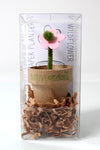 Seeded Paper Planter
