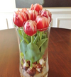 Grow Tulips Year-round