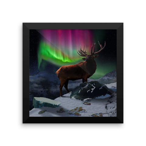 Scottish Viking's Twin peaks Bull Elk Framed photo paper poster