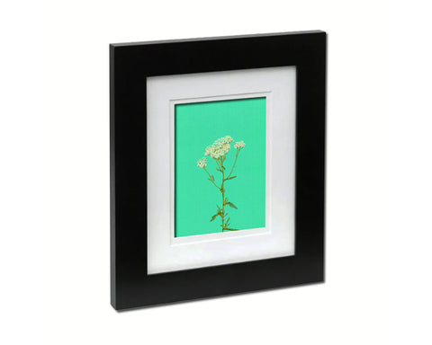 Achillea Millefolium Colorful Plants Art Wood Framed Print Wall Decor Gifts