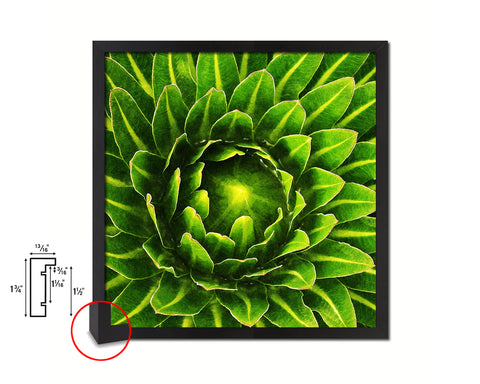 The Cactus Bud of Plant Evergreen Succulent Leaves Spiral Plant Framed Print Home Decor Wall Art