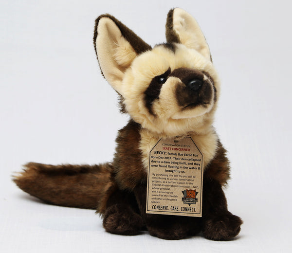 Bat-Eared Fox:  Becky or Bandit