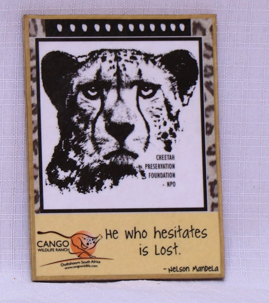 Fridge Magnet Messages - Cheetah