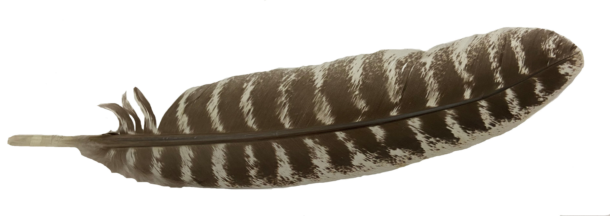 Smudging Feather - Perfect for Wafting Smoke During your Ceremony - Approx. 7-8""