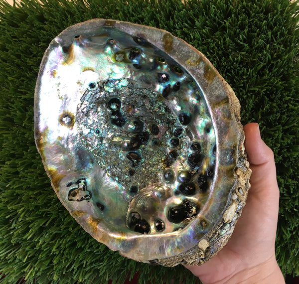 Ugly Duckling Sale - Large Abalone Shell with Slight Imperfections - Works Great as a Smudging Bowl