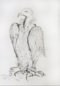 Original Charcoal Drawing - Eagle