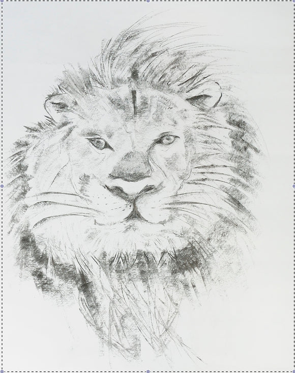 Original Charcoal Drawing - Lion