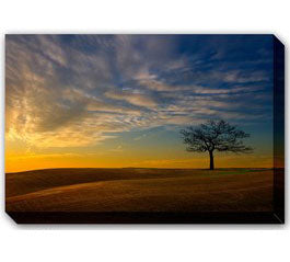 Tree Outdoor Canvas Art