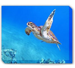 Wildlife Outdoor Canvas Art
