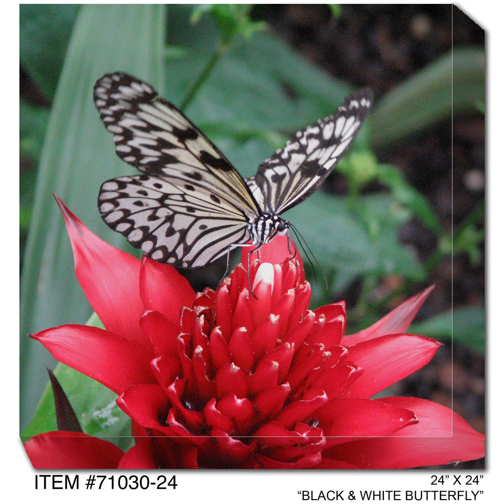 Black & White Butterfly Outdoor Canvas Art