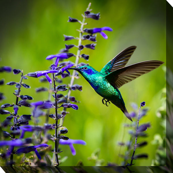 Hummingbird #7 Outdoor Canvas Art  - Soothing Company