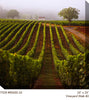 //cdn.shopify.com/s/files/1/2507/6008/products/80400-24_Vineyard_Walk_2_24x24.jpg?v=1523007124