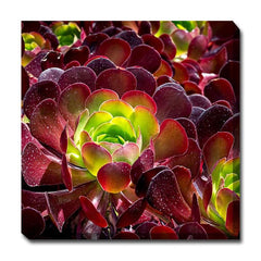 Burgundy Beauty Outdoor Canvas Art - Outdoor Art Pros
