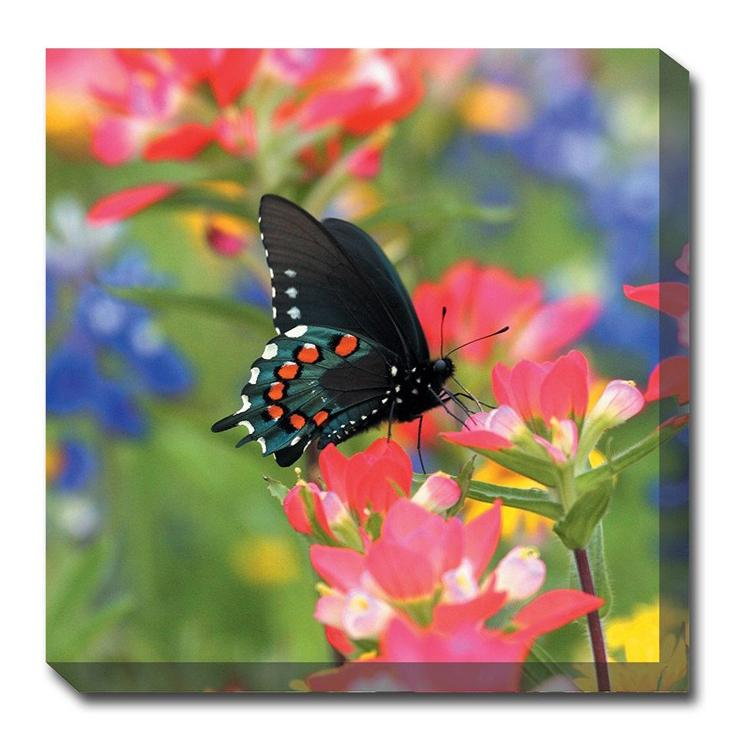 Butterfly on Paintbrush Canvas Wall Art - Outdoor Art Pros