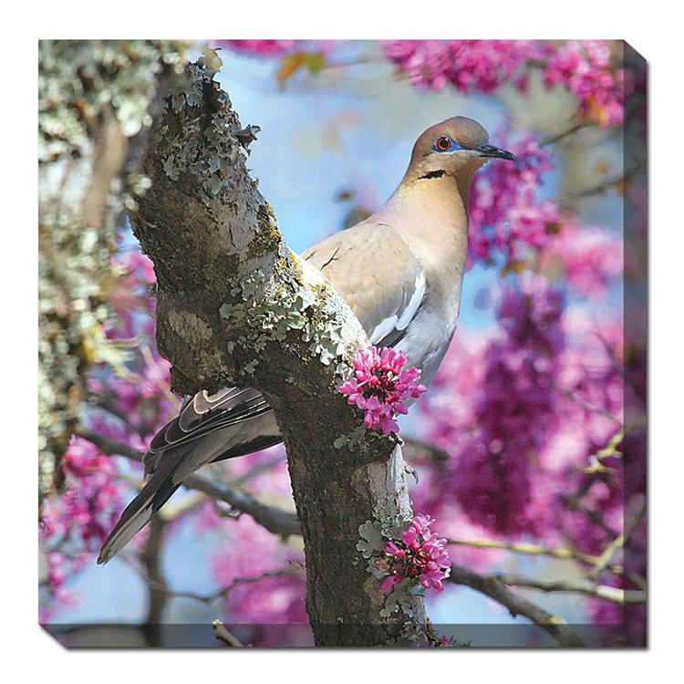 Dove In Redbud Outdoor Canvas Art - Outdoor Art Pros